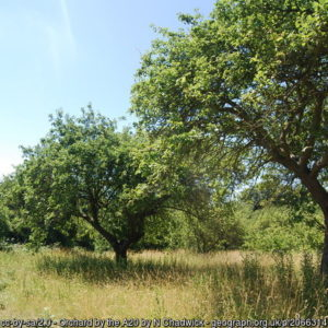 Orchard by the A20